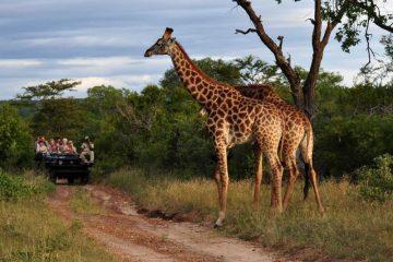 За љубителите на дивината! Сафари, Африка.