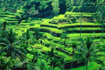 Бали најпосетената дестинација во светот.