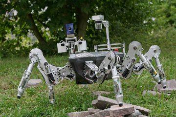 Роботи инспирирани од природата.