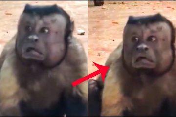 Мајмун со човечки лик ги освојува социјалните мрежи