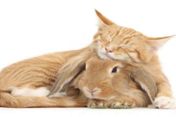 Зајакот направи се за да го спаси животот на својот пријател
