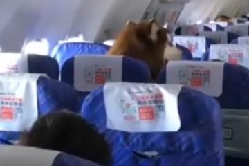 Вистината за кучето кое имало свое седиште во авион