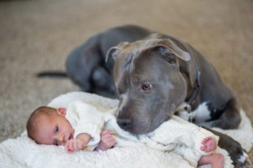 Женка питбул спаси бебе од запален стан