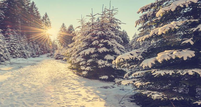 Зимата доаѓа утре? Најубавите фотографии се тука