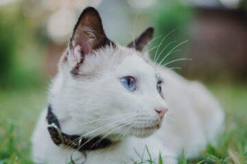 Сакав да патувам низ светот, но напуштената мачка го смени тоа