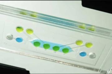 Тестирање на токсичност на плацентата и ембрионот